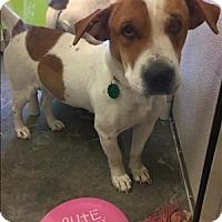 Adopt A Pet :: Buffy - Neosho, MO