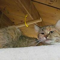 Adopt A Pet :: Paisley - Cincinnati, OH