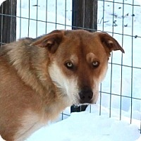 Adopt A Pet :: Neela- pre adoptable, ready 25 Jan - Priest River, ID