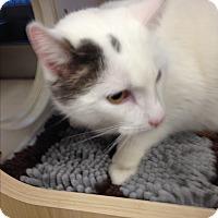 Adopt A Pet :: Mario - San Ramon, CA