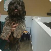 Adopt A Pet :: AJ - Thousand Oaks, CA