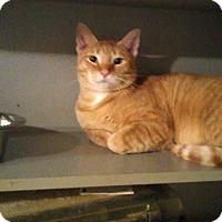 Adopt A Pet :: Noah - Bayside, NY