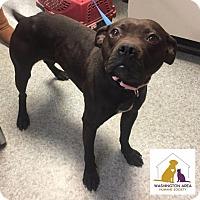 Adopt A Pet :: Jazzy - Eighty Four, PA