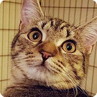 Adopt A Pet :: Crystal - Irvine, CA