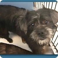 Adopt A Pet :: Nash - Boulder, CO