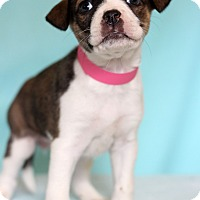 Adopt A Pet :: Paige - Waldorf, MD