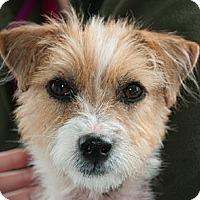 Adopt A Pet :: Kate - Lyme, CT