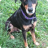 Adopt A Pet :: Rudi--pending - New Richmond, OH