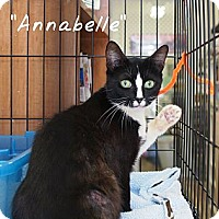 Adopt A Pet :: Annabelle - Ocean City, NJ