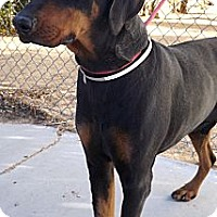 Adopt A Pet :: G.I. Joe - Fillmore, CA
