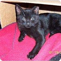 Adopt A Pet :: Jamie - Island Park, NY