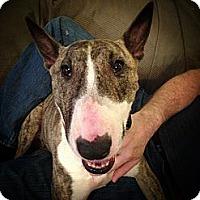 Adopt A Pet :: Gracie - Sachse, TX