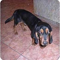 Adopt A Pet :: Baldwin - Phoenix, AZ