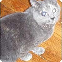 Adopt A Pet :: Penny - Kensington, MD