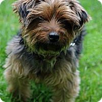 Adopt A Pet :: Nino - Tinton Falls, NJ