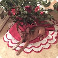 Adopt A Pet :: Radar - Nashville, TN