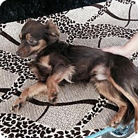 Adopt A Pet :: Chester - Surrey, BC
