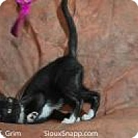 Domestic Shorthair Cat for adoption in New Orleans, Louisiana - Amigo