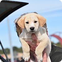 Adopt A Pet :: Wilco - Charlemont, MA