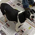 Adopt A Pet :: Bessie