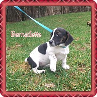 Adopt A Pet :: Bernadette - Harmony, Glocester, RI