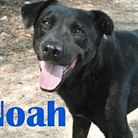 Adopt A Pet :: Noah - Orangeburg, SC