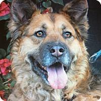 Adopt A Pet :: JAKE VON JUNIPER - Los Angeles, CA