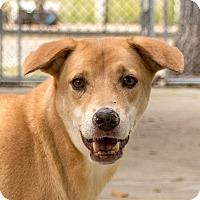 Adopt A Pet :: Taj - Long Beach, NY
