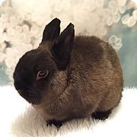 Adopt A Pet :: Sebastian - Auburn, CA