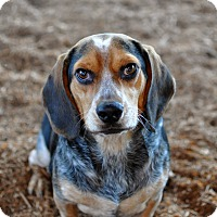 Adopt A Pet :: Jimmy - Tanner, AL