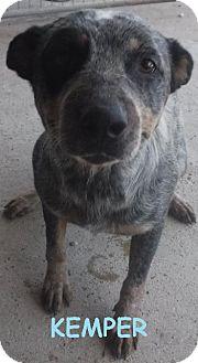 Australian Cattle Dog Dog for adoption in Batesville, Arkansas - Kemper