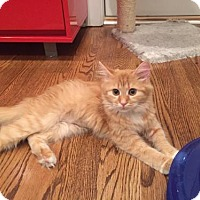 Adopt A Pet :: Carlyn (Has Application) - Washington, DC