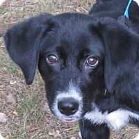Adopt A Pet :: Palmer - Harrisonburg, VA