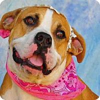 Adopt A Pet :: TAMMY - Louisville, KY