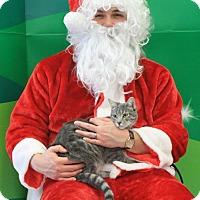 Adopt A Pet :: Mimi - Burlington, WA
