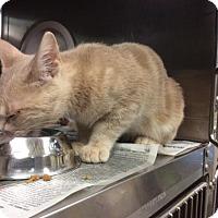 Adopt A Pet :: Sammy - Janesville, WI