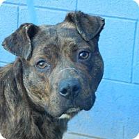 Adopt A Pet :: Avery - Randleman, NC