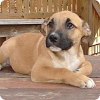 Adopt A Pet :: d - Delta - Columbia, MD