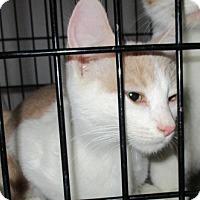 Adopt A Pet :: BUFFY - detroit, MI