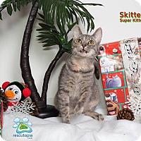 Adopt A Pet :: Skitten - Baton Rouge, LA