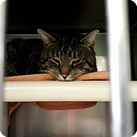 Adopt A Pet :: Whiskey - THORNHILL, ON