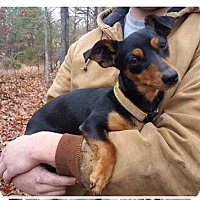 Dachshund Mix Dog for adoption in Plainfield, Connecticut - Cindy Lou