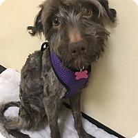 Adopt A Pet :: Freedom - Thousand Oaks, CA