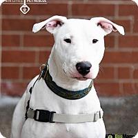 Adopt A Pet :: Jackson (Jax) - St Paul, MN