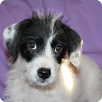 Adopt A Pet :: Maize - Albany, NY