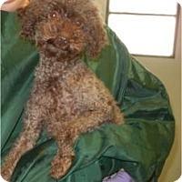 Adopt A Pet :: Rusty - Antioch, IL