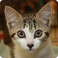Adopt A Pet :: Fiona (PP) - Little Falls, NJ