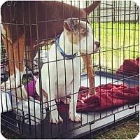 Adopt A Pet :: Max - Justin, TX