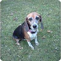 Adopt A Pet :: Annie E - Phoenix, AZ