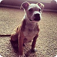 Adopt A Pet :: Dodger - Owasso, OK